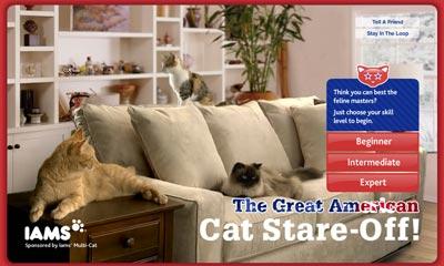 cat_challenge.jpg