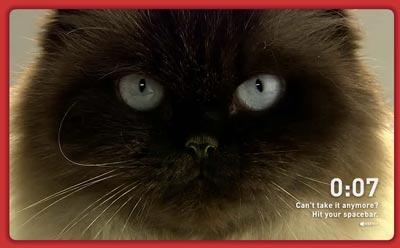 cat_challenge2.jpg