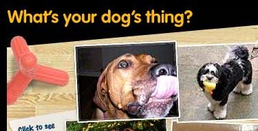pedigreedog.jpg