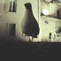 Seagull stole GoPro