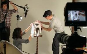 catvertising