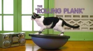 cats_aerobics3